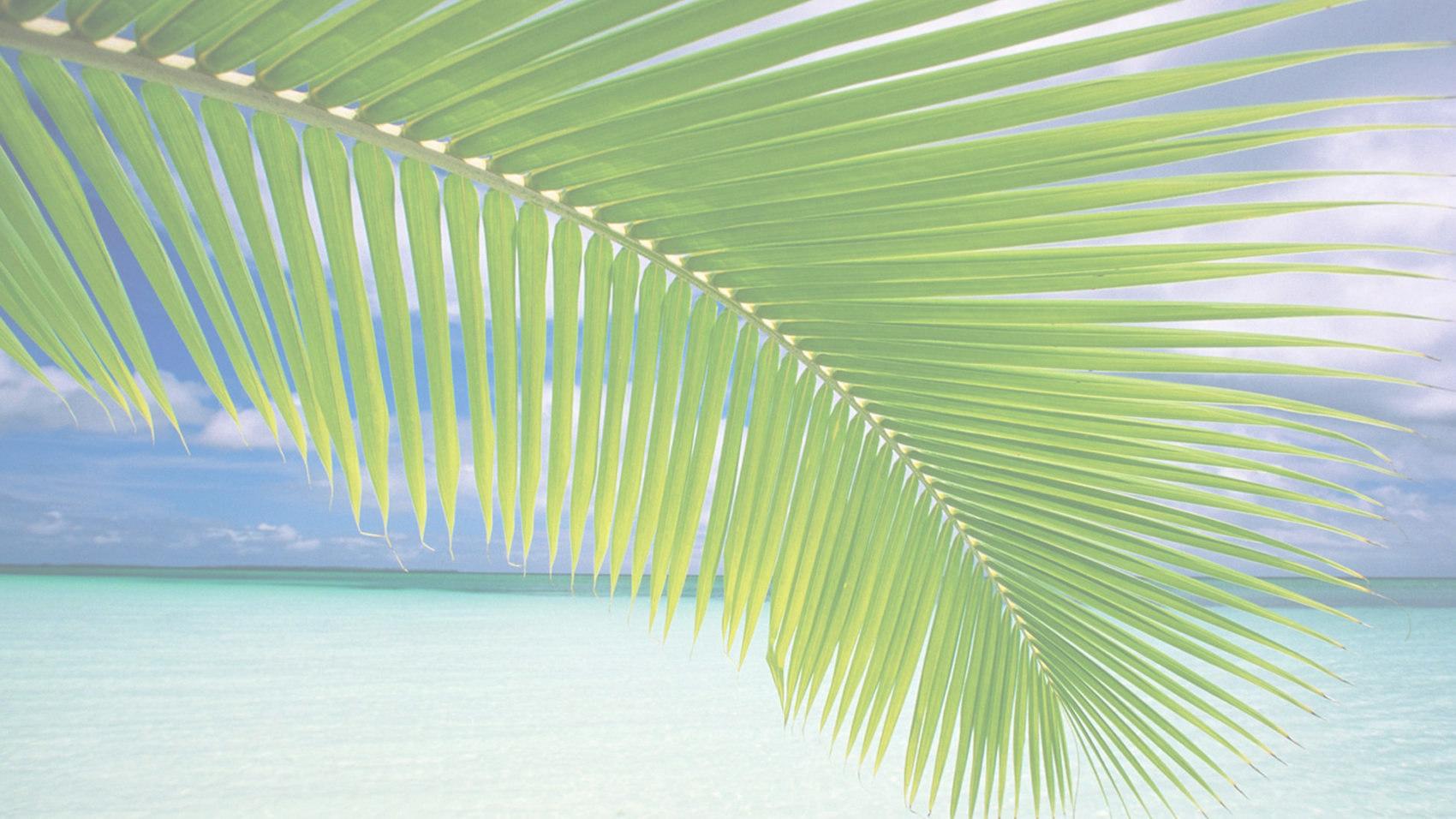 palmtreebackgroundB